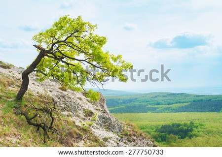 Lonely tree on top of the mountain. - stock photo