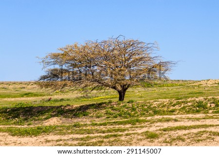 Lonely tree  without leaves on a meadow - stock photo