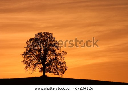 Lonely trees on the hill at sunrise - stock photo