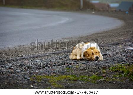 Lonely waiting lying old dog - stock photo