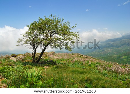 Lonely weathered tree on a hill in the mountains of Crete, Greece - stock photo