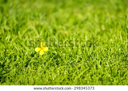 Lonely yellow flower in the grass. Shallow DOF - stock photo