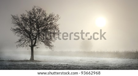Lonesome tree in the misty winter morning - stock photo