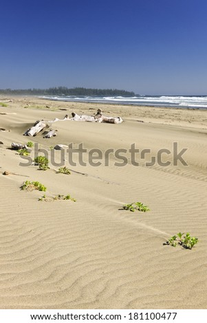Long Beach in Pacific Rim National park, Vancouver Island, Canada - stock photo