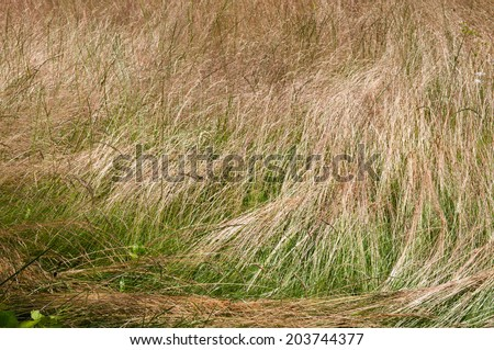 long dry grass as background - stock photo