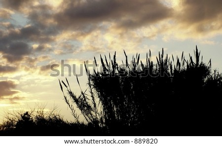 Long Grass - stock photo
