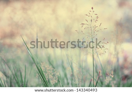 Long grass meadow closeup. Nature in details. - stock photo