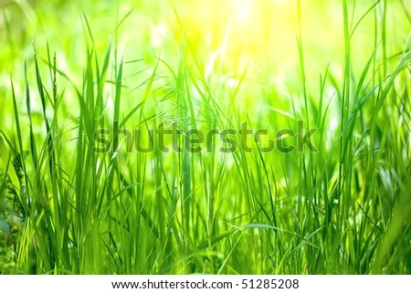 long grass meadow closeup with bright sunlight - stock photo