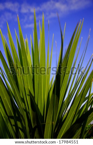 long grass with  blue sky - stock photo