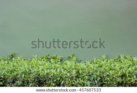 Long Green Bush or Hedgerow in front of Green Concrete Wall, Nature Background with Copy Space - stock photo