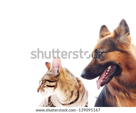 Long-haired german shepherd dog and a cat. - stock photo
