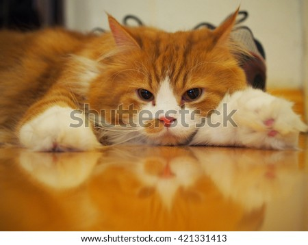 Long Haired Orange White Bi Color Traditional Doll Face Persian Cat Laying Down Looking Sleepy - stock photo
