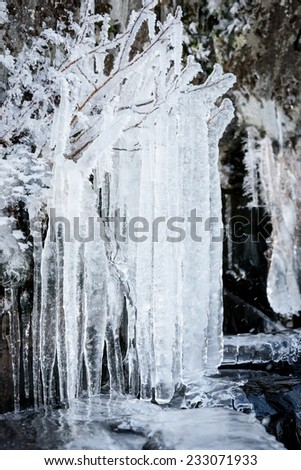 Long icicles hanging from tree branches - stock photo