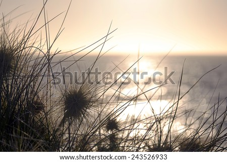 Long-leaved spinifex in silhouette and sunset by the beach at Cottesloe, Western Australia. - stock photo