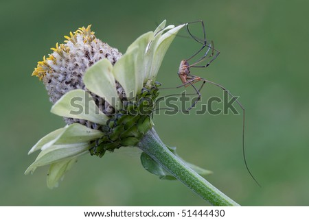 Long-legged spider on flower in green background - stock photo
