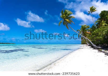 Long palm tree on a tropical white beach on a deserted island in the South Pacific - stock photo