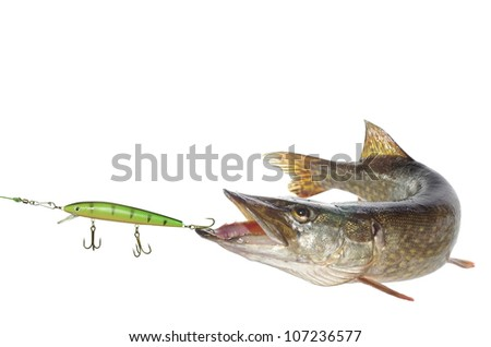 long pike and artificial bait on white background - stock photo