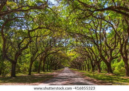 Long road with canopy of old live oak trees draped in spanish moss. - stock photo