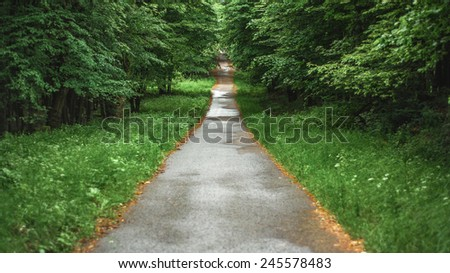 Long straight wet forest asphalt road in the beautiful vivid fresh green spring foliage framed by dry yellow leaves from the previous autumn - stock photo