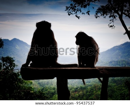 Long Tailed Macaque - stock photo