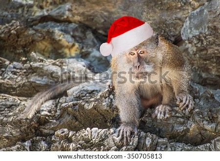 Long-tailed monkey animal in red santa hat on the rock of Thailand island, ?hristmas horizontal natural background or symbol of the Year 2016 by Chinese calendar  - stock photo