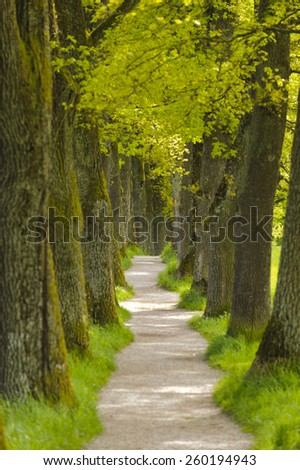 long tree alley with small foot path in Bavaria - stock photo