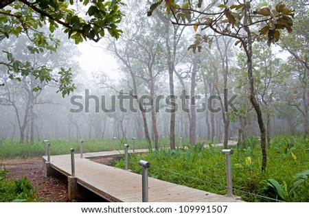 Long walk way in highland tropical forest, Chaiyaphum province, Thailand. - stock photo