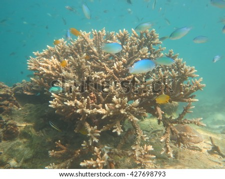 Longicyathus,staghorn coral, septa. - stock photo