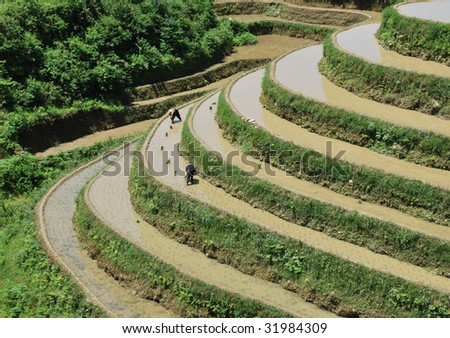 Longji Terrace was first built in the Yuan Dynasty with a history over 800 years. After generations' cultivating, the terrace is now a typical representative of Chinese farming culture. - stock photo