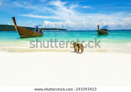 Longtail boat and monkeys waiting for food in Monkey Beach, Phi Phi Islands, Thailand - stock photo