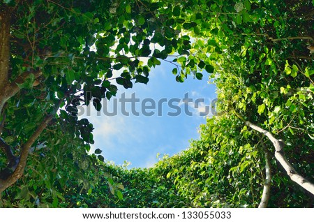 Look at the sky through the leaves of the tree - stock photo