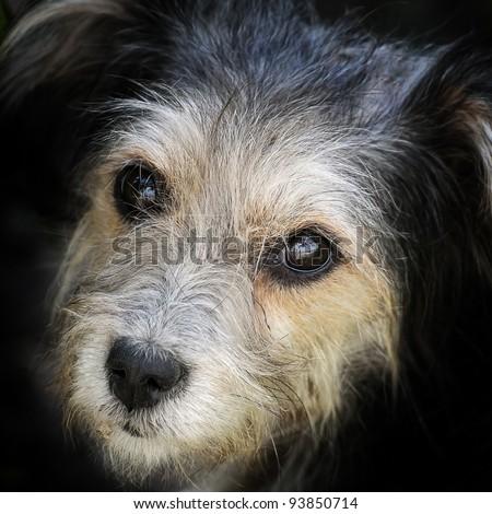 look hungry stray dog - stock photo