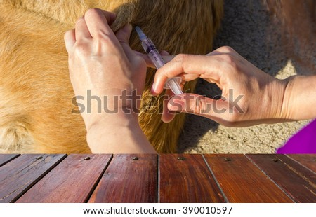 Look out from the table,injecting dog at fieldwork on sunlight as background. - stock photo