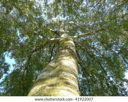 look up to the tree - stock photo