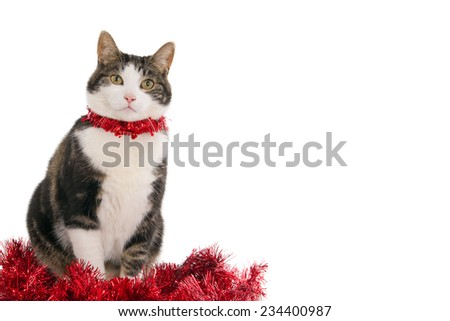 Looking cat with red Christmas decorations, isolated on white, with empty space for text - stock photo