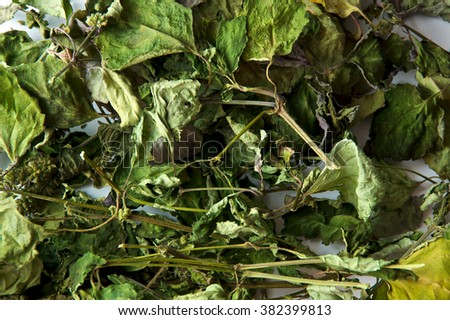 Looking down on pile of dried patchouli leaves, branches and flowers on white. - stock photo