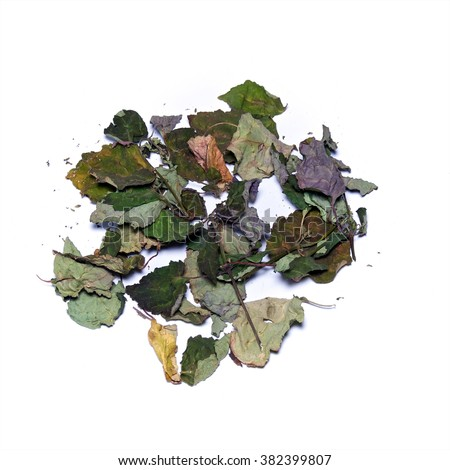Looking down on pile of dried patchouly leaves, branches over white, not isolated. - stock photo