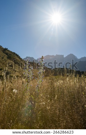 looking into sun as it rises from behind Mount Cook Ranges and shines across valley fields. New Zealand scenery. - stock photo
