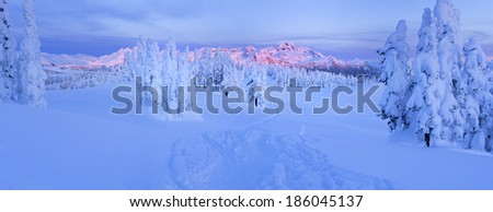 Looking onto a winter hiking trail with snow covered trees on either side and a mountain range in the background - stock photo