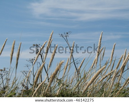 looking through grasses to the sea and sky - stock photo
