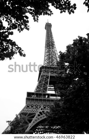 Looking to Eiffel Tower through the leaves of a tree, Paris, France (black and white photo) - stock photo
