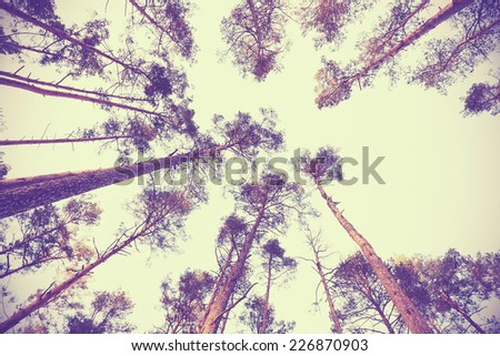 Looking up through autumn trees, retro filtered background. - stock photo