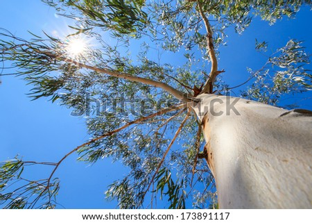 Looking up to the tree with the sun and blue sky background - stock photo