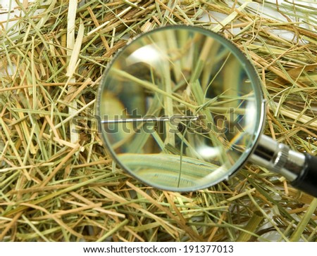 loops and needles in the hay closeup - stock photo
