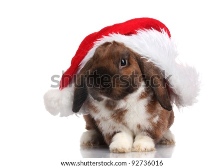 Lop-eared rabbit in cap of Santa Claus isolated on white - stock photo