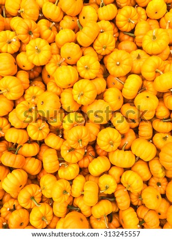 Lost of bright orange pumpkins at the autumn market. - stock photo