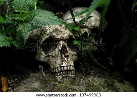 Lost Skulls - Human remains in woodlands - stock photo