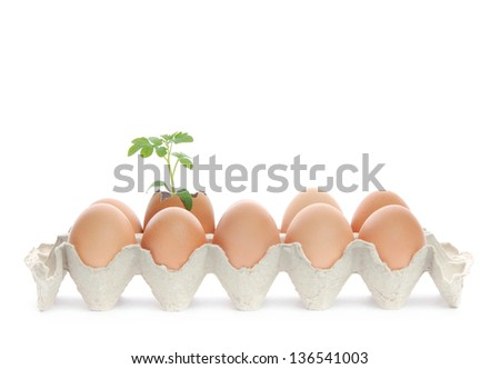 Lot of fresh brown eggs in a carton box and green plant grows in one of them. - stock photo
