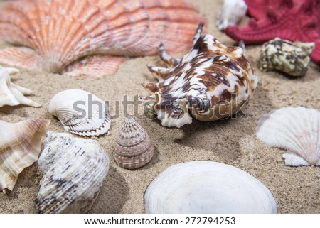 Lot of Sea shells on sand as background - stock photo
