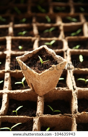 Lot of seedlings in pots ecological farm - stock photo